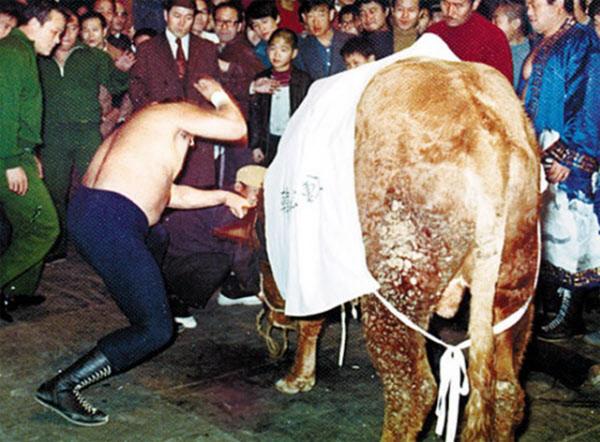 1970년대 초 천규덕 선수가 장충체육관에서 맨손으로 소 를 때리는 모습./조선DB
