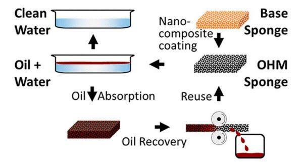 기름 흡착하는 스마트 스펀지 작용 과정. 나노복합재를 코팅한 다음 기름막에 스펀지를 대면 기름만 흡수하고 물은 남긴다. 흡착한 기름은 짜내 재활용할 수 있다./미 노스웨스턴대