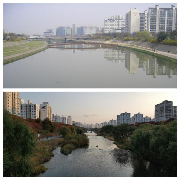 경기도 성남 탄천의 10년전과 최근의 모습. 10년 전 하탑교 일대(사진 위)는 황량했지만 성남시가 생태복원사업에 나서 최근 하탑교 일대(사진 아래)는 수풀이 우거지게 됐다./성남시