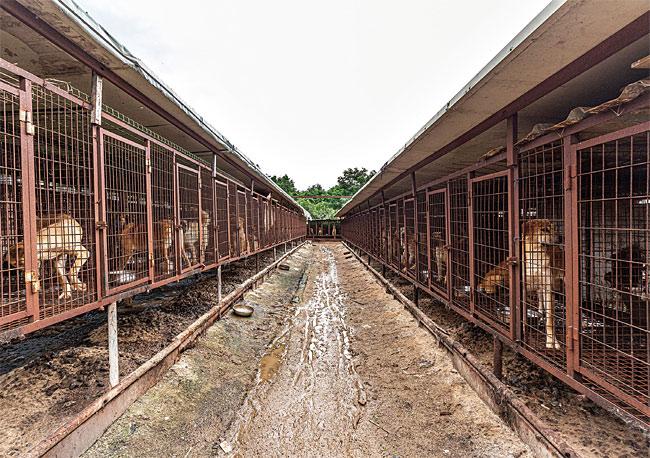대오를 갖춰 설치된 계양산 개농장(뜬장) 중 일부. photo 김종연 영상미디어 기자