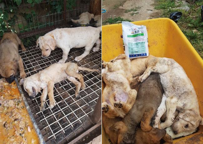 지난 7월 초 전염병으로 죽은 계양산 개농장 새끼개들. photo 개농장주 이씨
