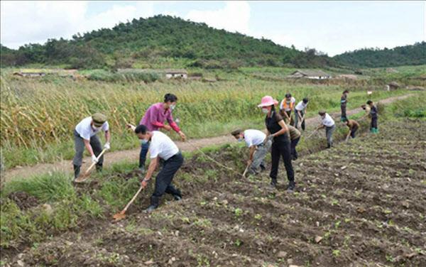 북한 황해남도 태풍 피해 현장에 노동당 간부들이 파견돼 근로자들과 함께 작업하고 있다. /노동신문 연합뉴스