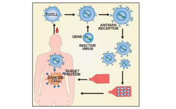 식약처, 노바티스 면역 항암제 국내 허가…1호 첨단바이오의약품