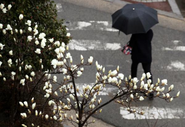 토요일 전국 봄비 … 수도권 미세 먼지 '나쁜'